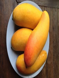 Mango Maxaçanok (Honey Mango)